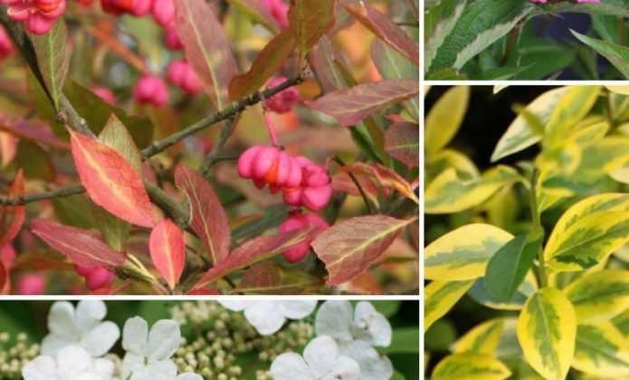 Haie fleurie : quels arbustes planter, quand et comment ?
