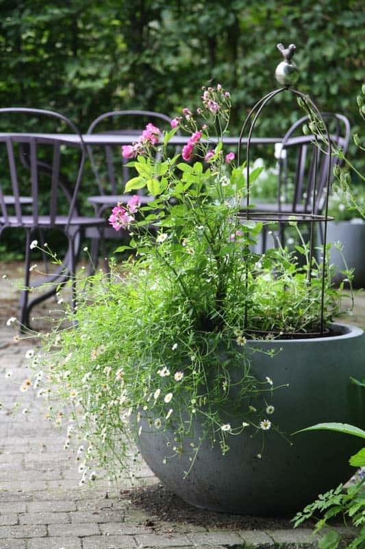 la plantation du rosier o quand et comment conseils illustr s promesse de fleurs. Black Bedroom Furniture Sets. Home Design Ideas