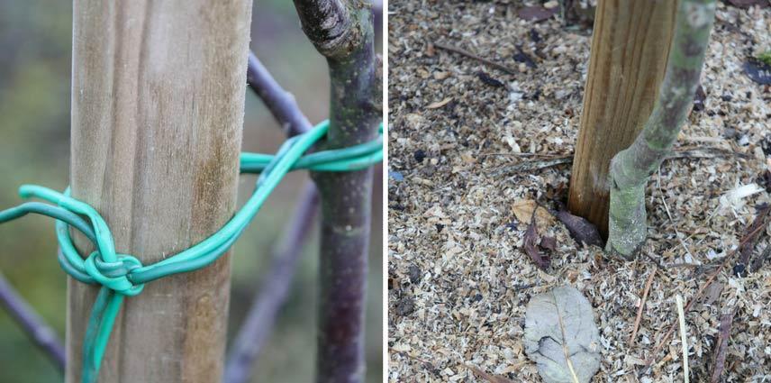 La plantation des arbres fruitiers nos conseils pour la r ussir blog promesse de fleurs - Quel arbre fruitier planter ...