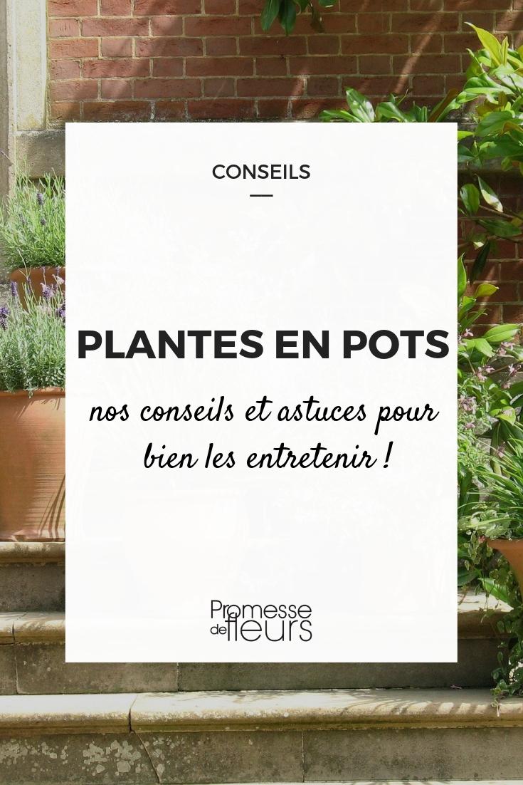 entretenir les plantes en pot