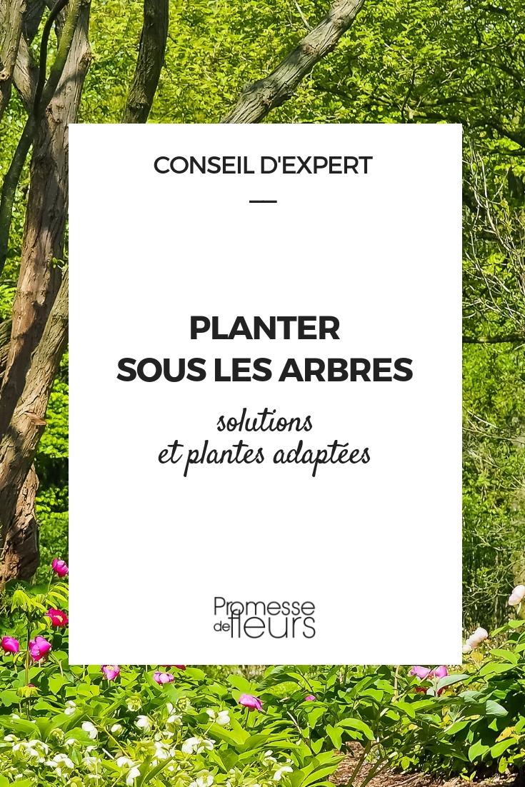 plantes pour pieds d'arbres