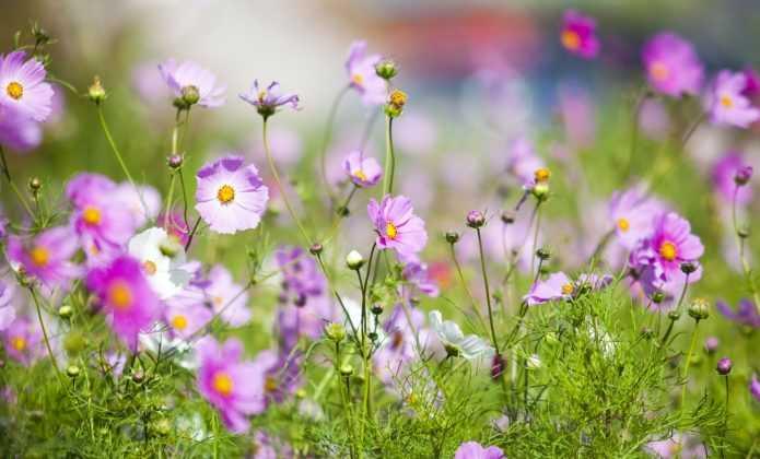Semer les graines en pleine terre