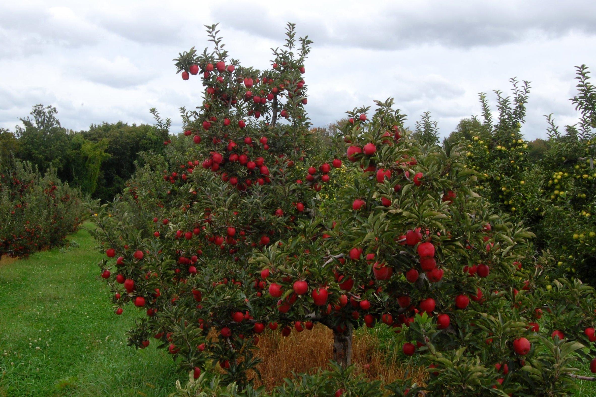 Planter Des Coquelicots Dans Son Jardin semer une prairie fleurie au pied des arbres fruitiers.