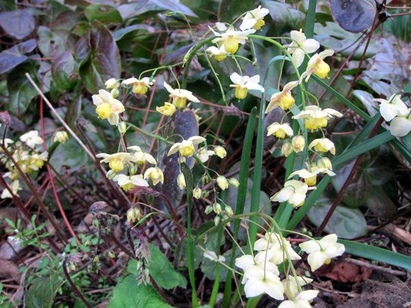 Comment utiliser les fleurs jaunes au jardin?