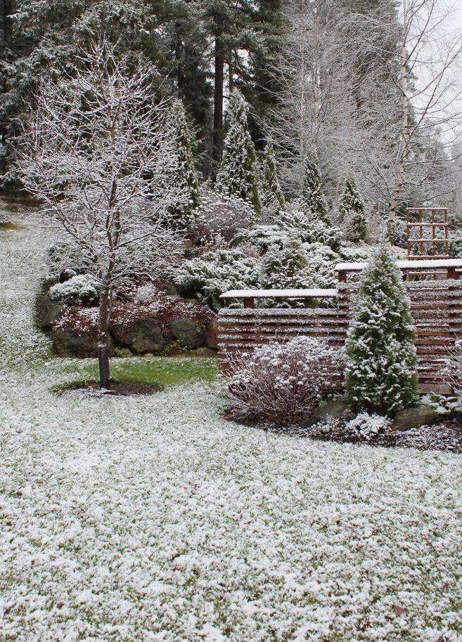 Le froid arrive, protégez vos plantes !