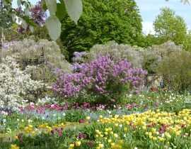 Le jardin Hermannshof en avril