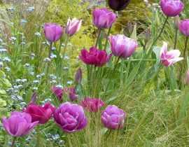 Top 15 des tulipes de mon jardin