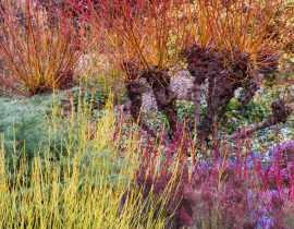 Hiver au jardin : petits plaisirs de janvier