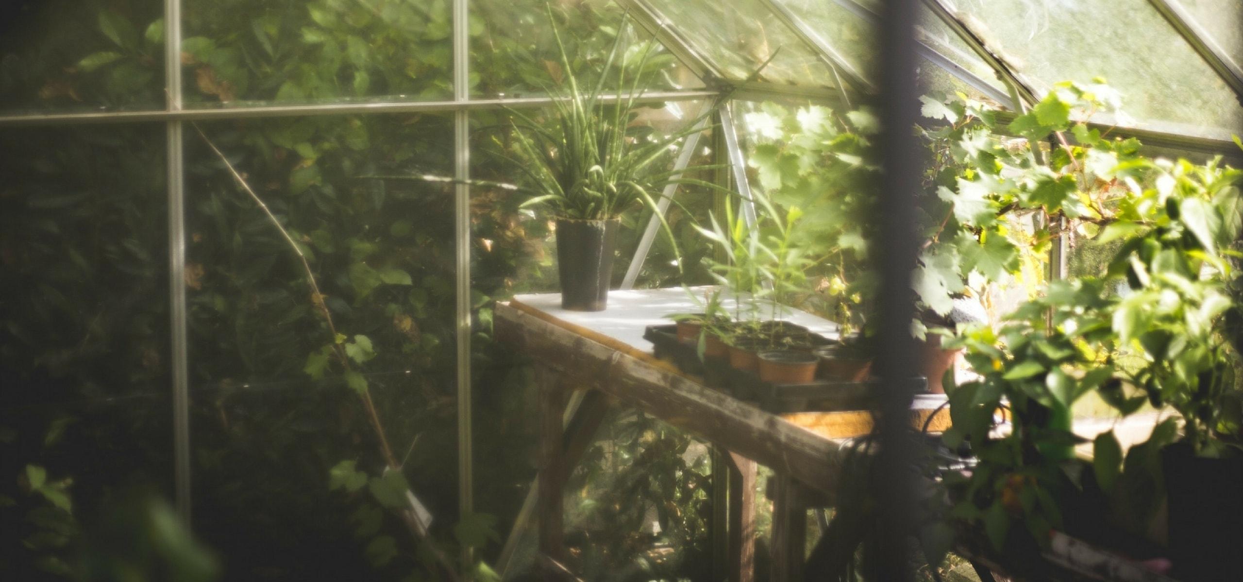 Planter les mini mottes potag res blog promesse de fleurs for Conseil plantation jardin