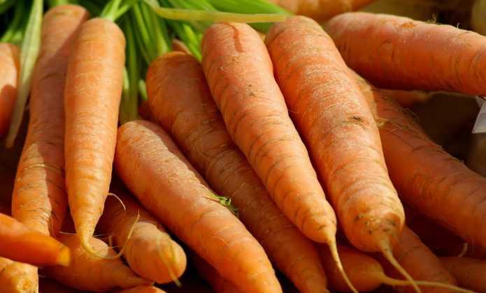 La carotte : la semer, la cultiver, la récolter au potager