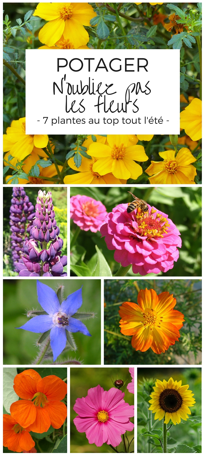 Des fleurs au potager 7 plantes indispensables for Au jardin des sans pourquoi