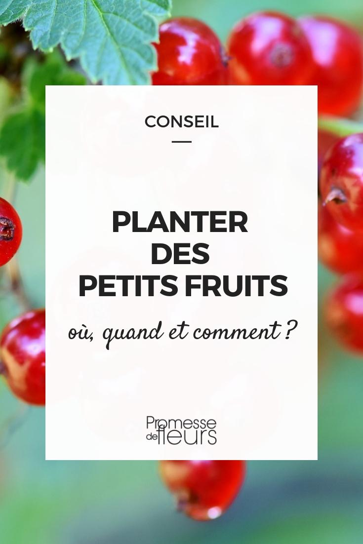 Plantation groseillier, cassis, framboisier, myrtillier