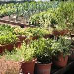 Aromatiques : 5 bonnes façons de les intégrer au jardin