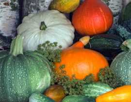 Semer et cultiver courges, courgettes, potirons et autres citrouilles : c'est simple et c'est maintenant !