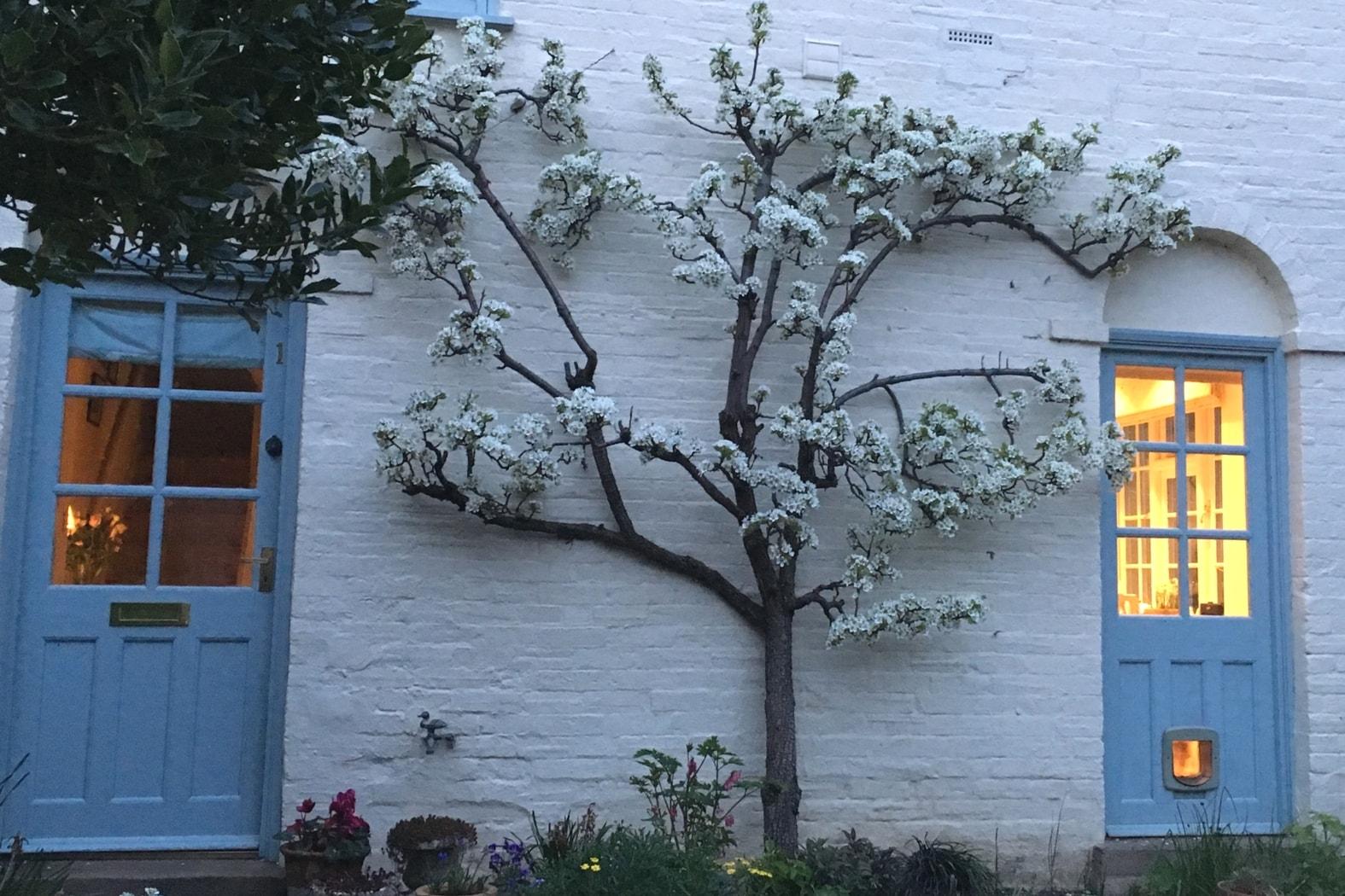 cr er un verger et choisir ses arbres fruitiers promesse de fleurs. Black Bedroom Furniture Sets. Home Design Ideas