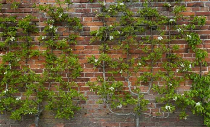 Arbres fruitiers haute tige entretien et taille conseils blog promesse de fleurs - Quel arbre fruitier planter ...