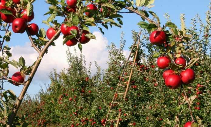 Cr er un verger et choisir ses arbres fruitiers blog promesse de fleurs - Arbre fruitier petit jardin ...