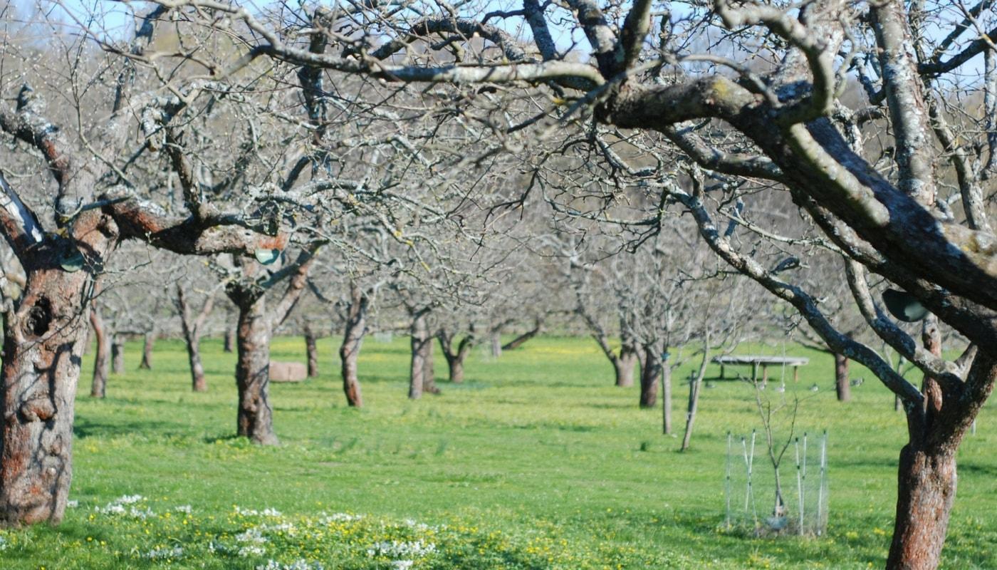 Arbres fruitiers prot ger le verger gr ce aux traitements naturels promesse de fleurs - Bouillie bordelaise sur arbres fruitiers en fleurs ...