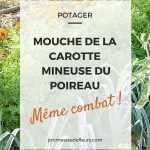 Mouche de la carotte, Mineuse du poireau : protégez vos cultures !