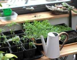 Échange de plantes : vivre son jardin autour du partage