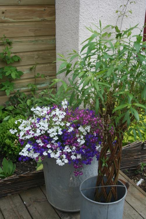plantes en pot et d ficit d 39 arrosage limiter les dommages du soleil blog promesse de fleurs. Black Bedroom Furniture Sets. Home Design Ideas