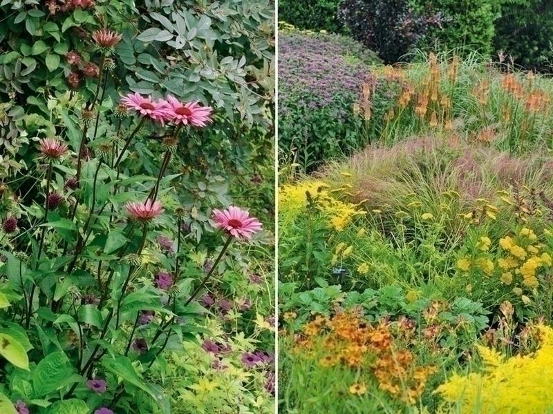 Guide de la couleur au jardin de francis peeters et guy for Au jardin des couleurs