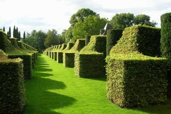 5 raisons de planter le charme ou carpinus betulus au jardin - Jardins du manoir d eyrignac ...