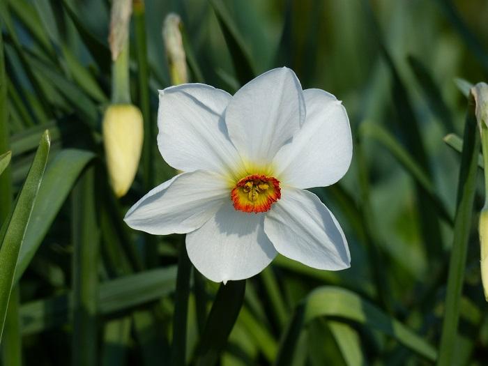 Top 15 des narcisses de mon jardin