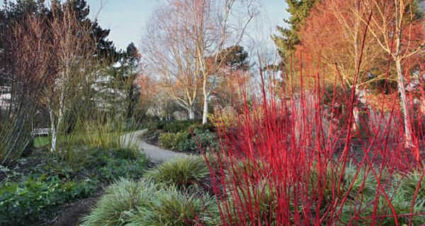 Jardins d 39 hiver une saison r invent e le dernier livre for Jardin en hiver