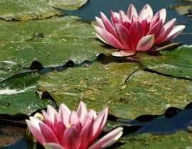 Le jardin de Claude Monet à Giverny, un blog à découvrir