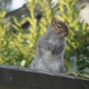 ecureuil-jardin-de-patou