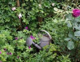 Blog jardin : Patou et son petit jardin en ville