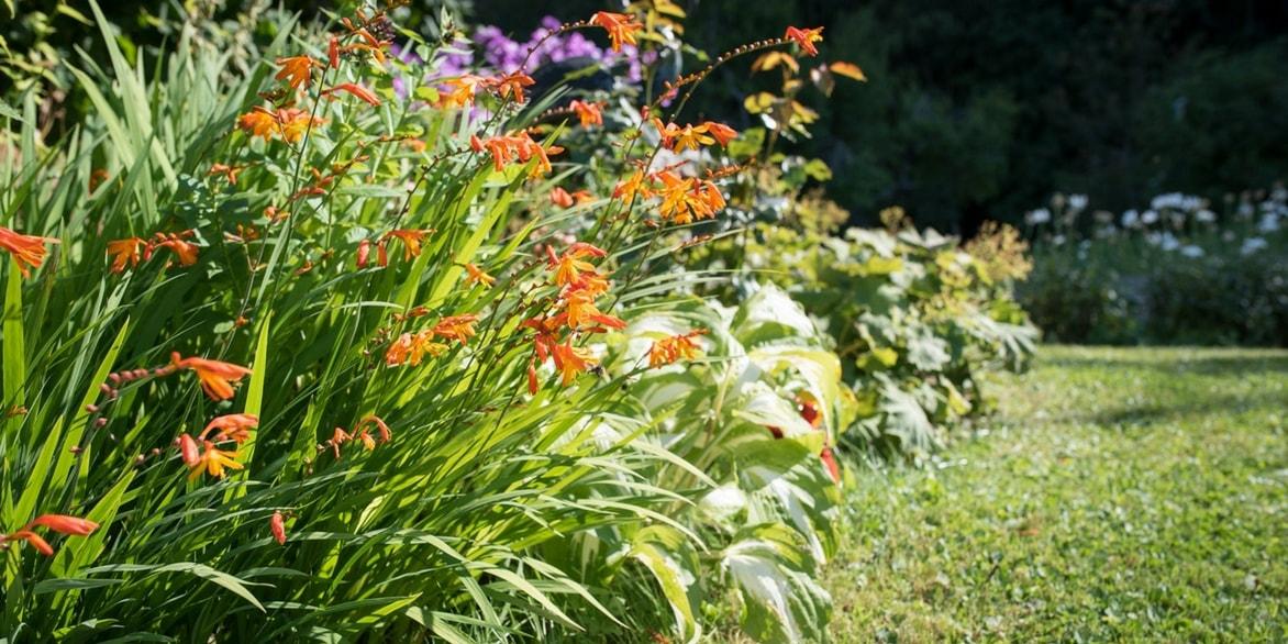 quelles fleurs planter en juillet planter les iris with. Black Bedroom Furniture Sets. Home Design Ideas