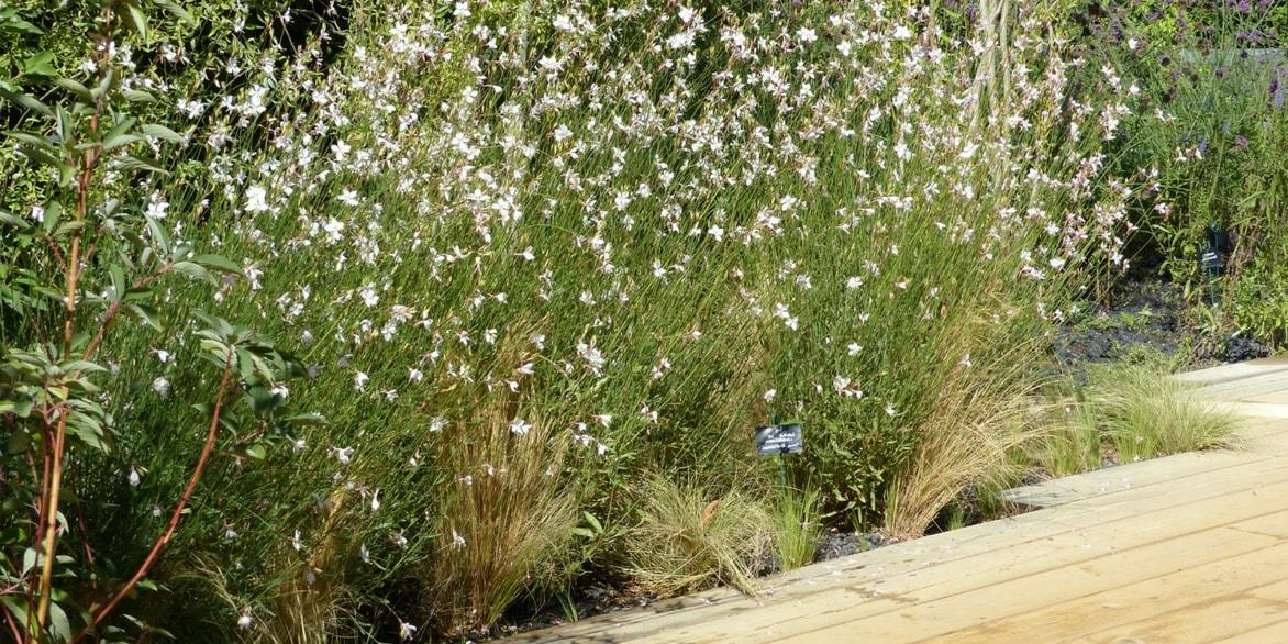 Quelle fleur planter en septembre good astilbe with quelle fleur planter en septembre quel - Que planter en septembre fleurs ...