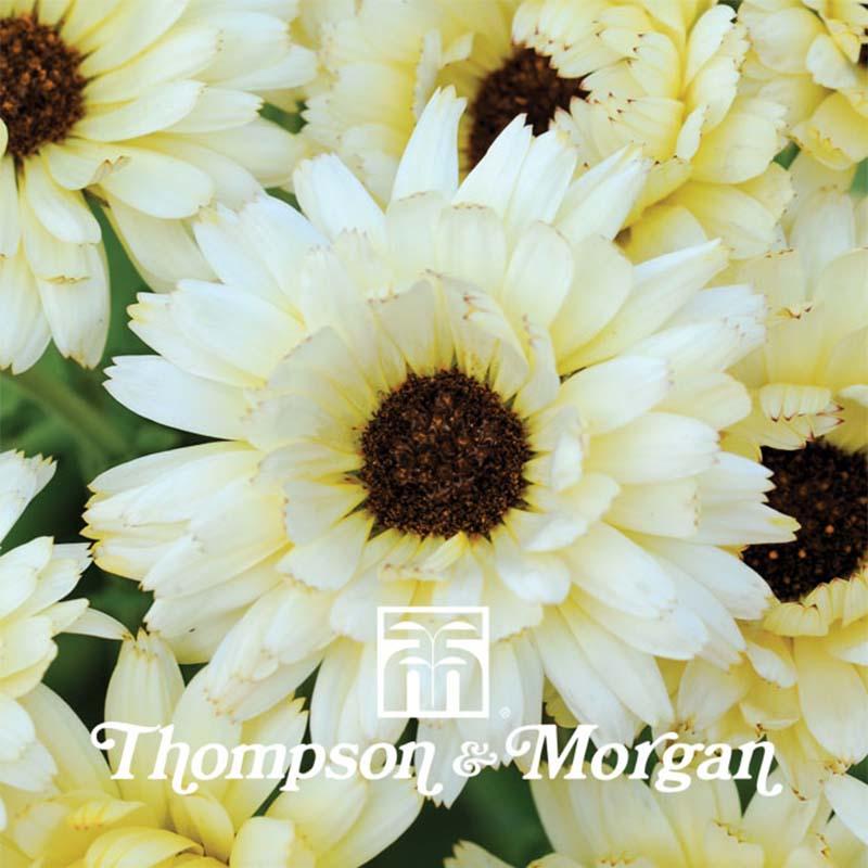 nouvelles graines de fleurs en 2017 promesse de fleurs blog promesse de fleurs. Black Bedroom Furniture Sets. Home Design Ideas