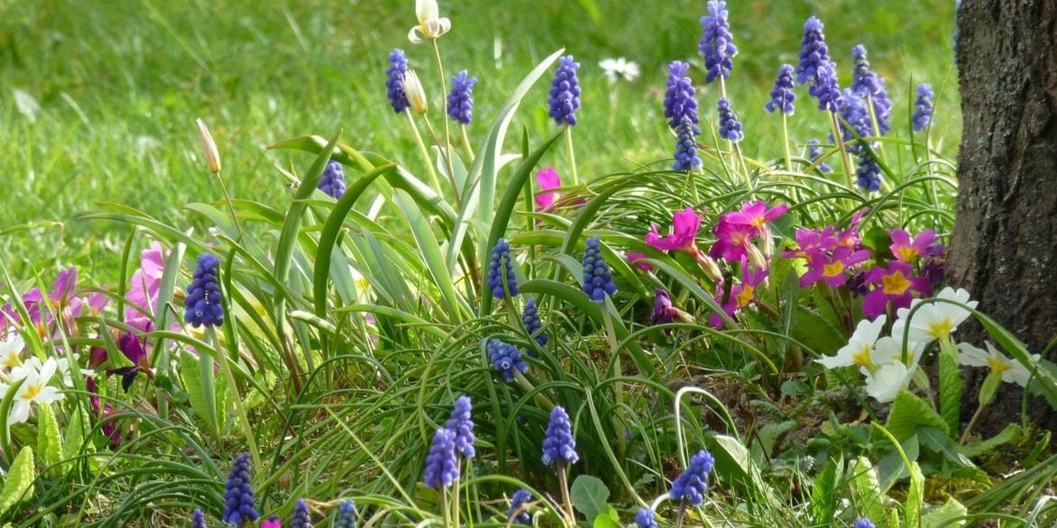 Primev re plantation culture entretien et association for Association entretien jardin