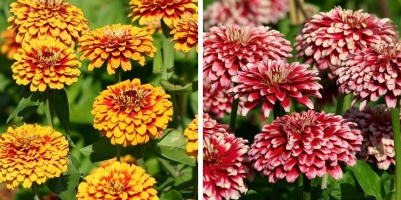 Blog Promesse De Fleurs