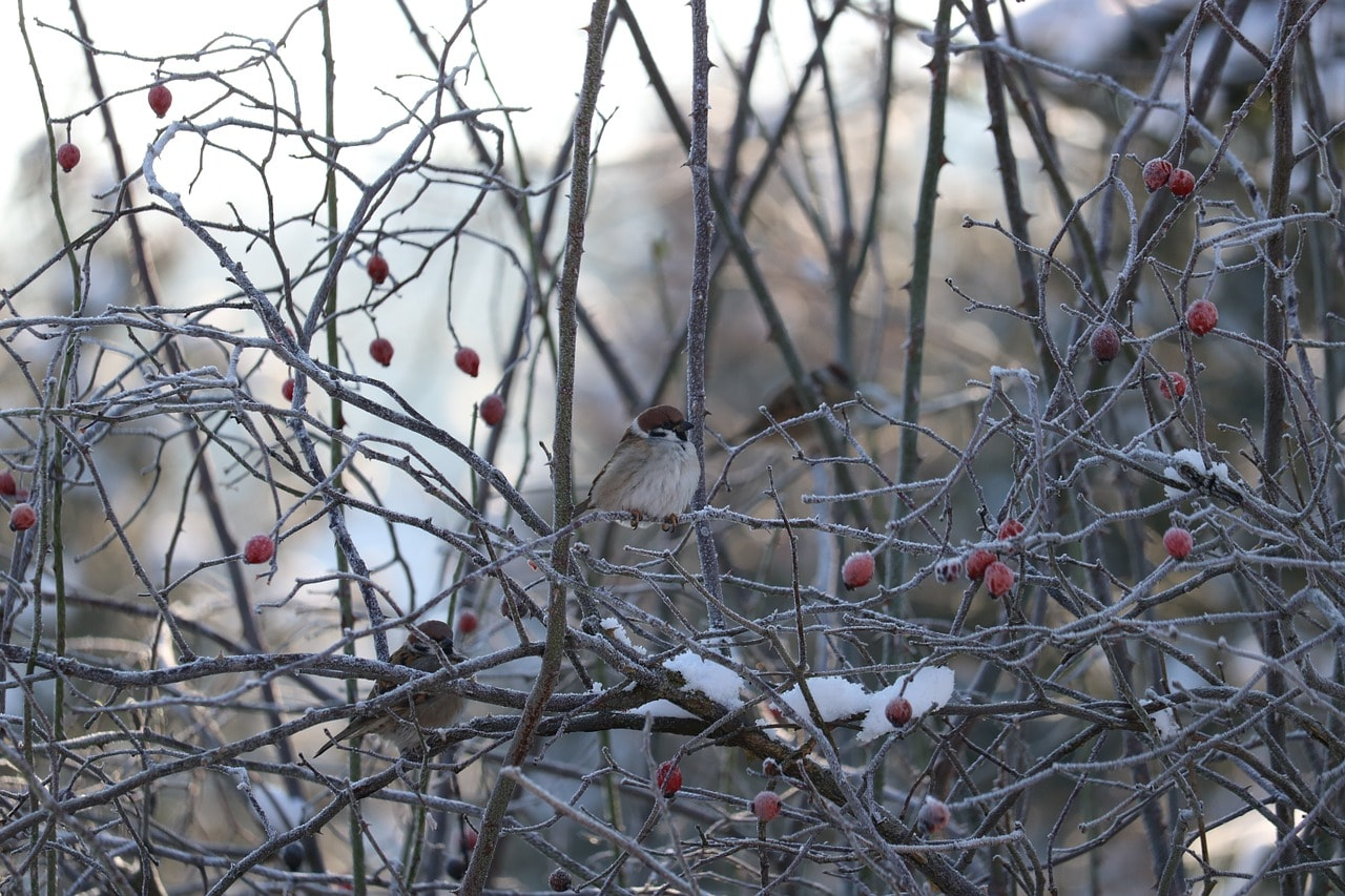Le froid arrive comment prot ger les plantes du jardin for Jardin en hiver
