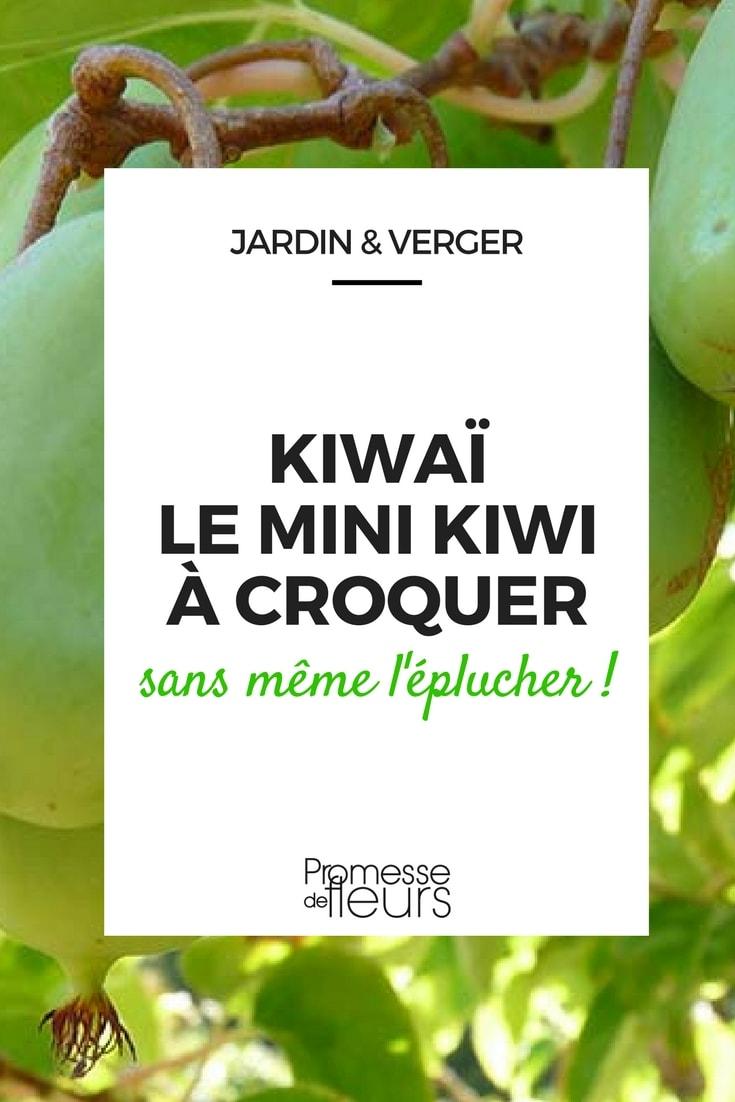 Kiwa ou kiwi de sib rie un mini kiwi mignon croquer - Ou pousse le kiwi ...