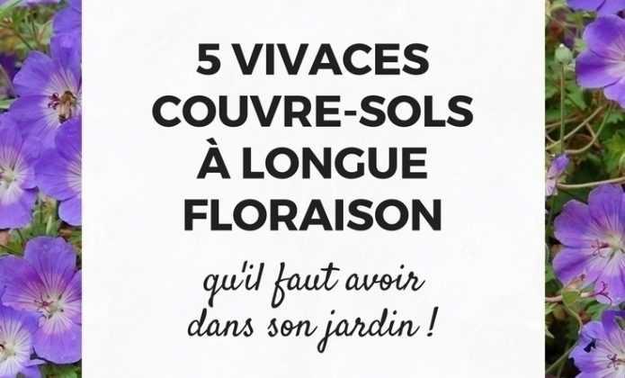 Que planter sous un arbre blog promesse de fleurs - Vivace couvre sol longue floraison ...