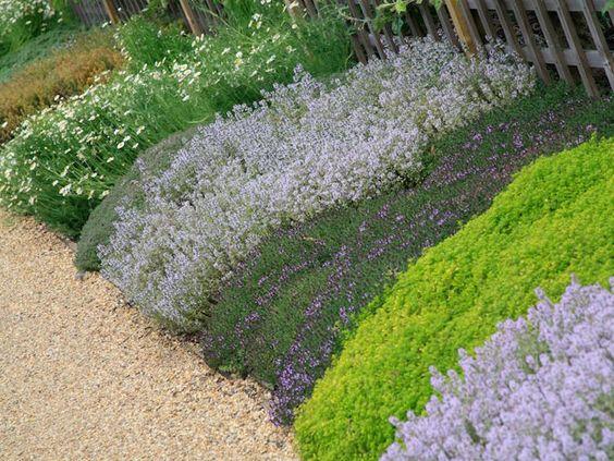 10 couvre sols persistants qu 39 il faut avoir dans son jardin - Amenager un talus dans son jardin ...