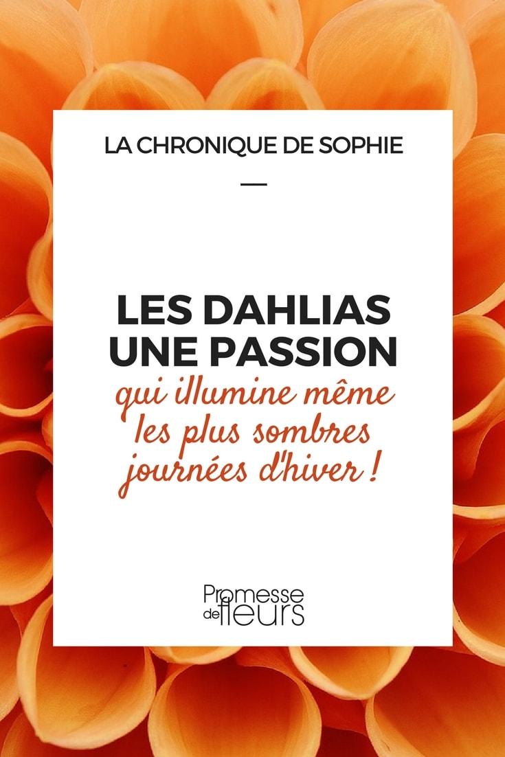 Les dahlias : une passion qui illumine même l'hiver