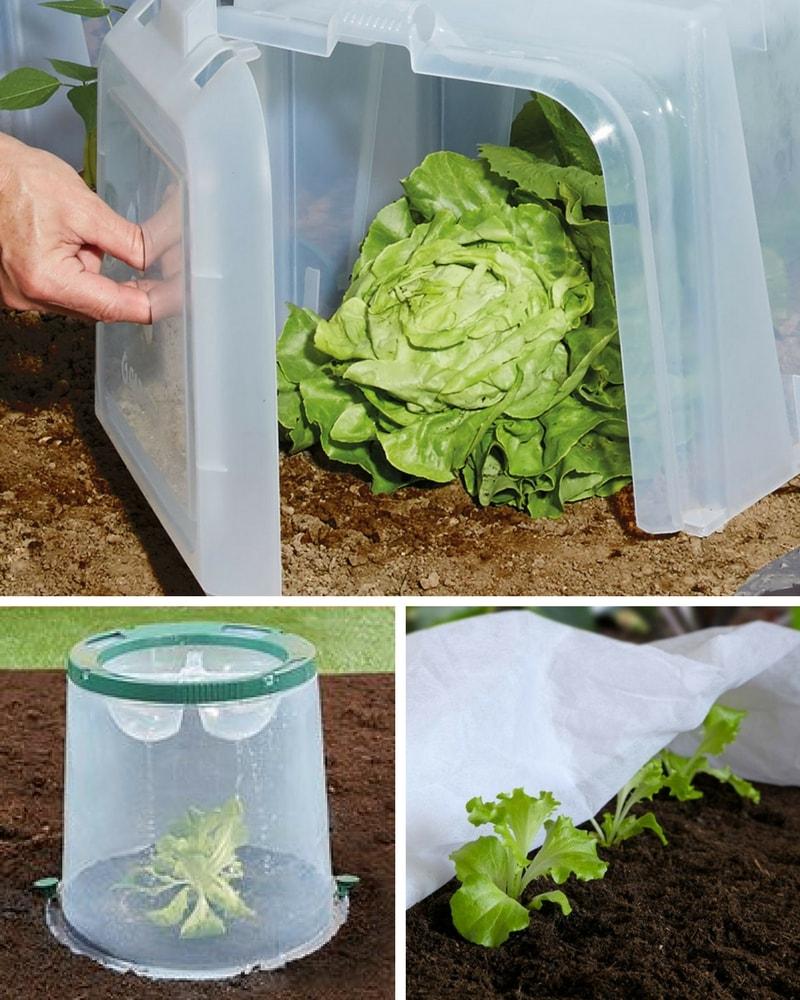 Potager Garden Blogs: Comment Protéger Ses Légumes Du Froid Au Potager : Nos