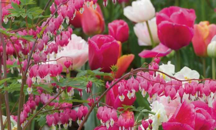 Coeur de Marie : 8 belles idées d'association