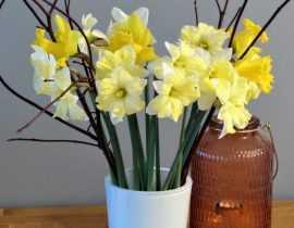 Cueillez des bouquets de narcisses !