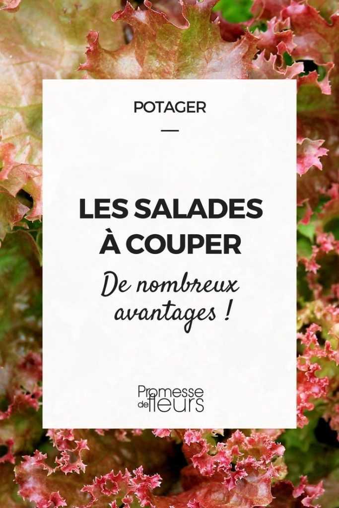 Les salades à couper : de nombreux avantages