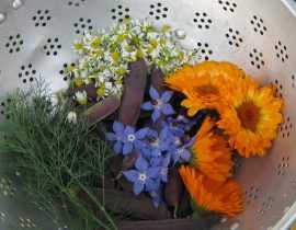 18 fleurs comestibles