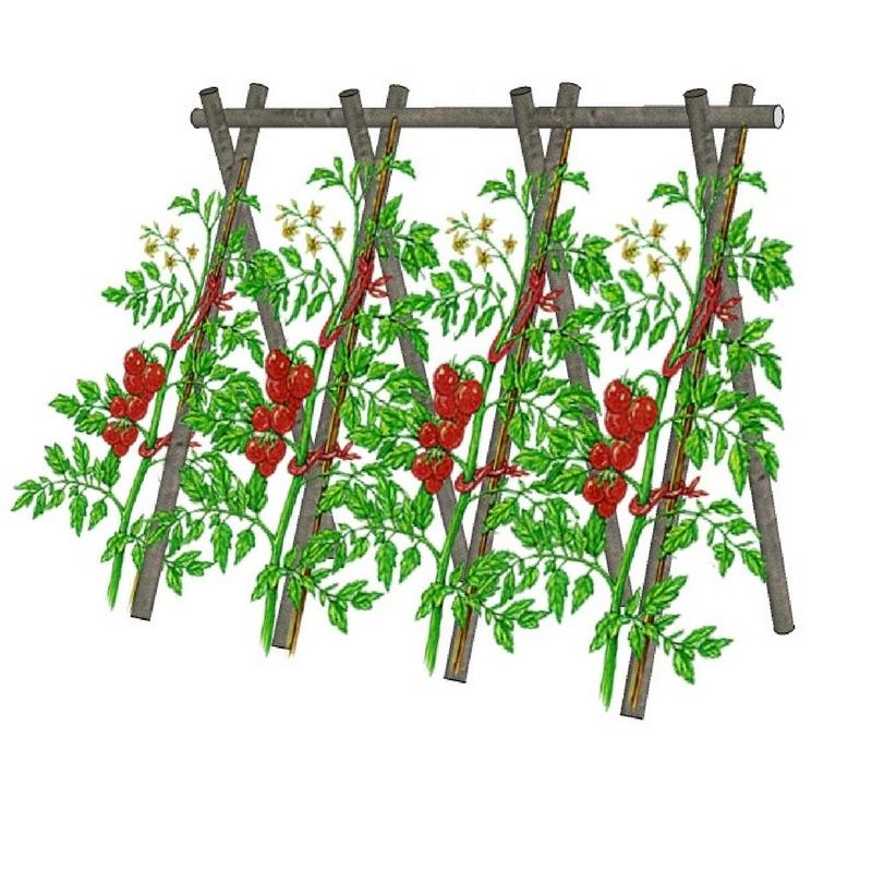tuteurer les tomates choix des piquets et techniques promesse de fleurs. Black Bedroom Furniture Sets. Home Design Ideas