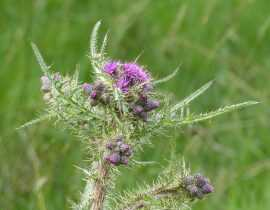 Impressions botaniques de retour d'Ecosse
