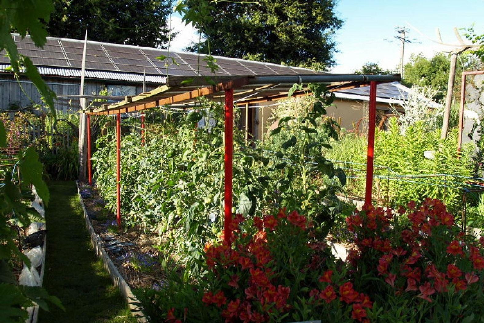 Faire ses semis de tomates maison design - Faut il couper les fleurs fanees des hortensias ...